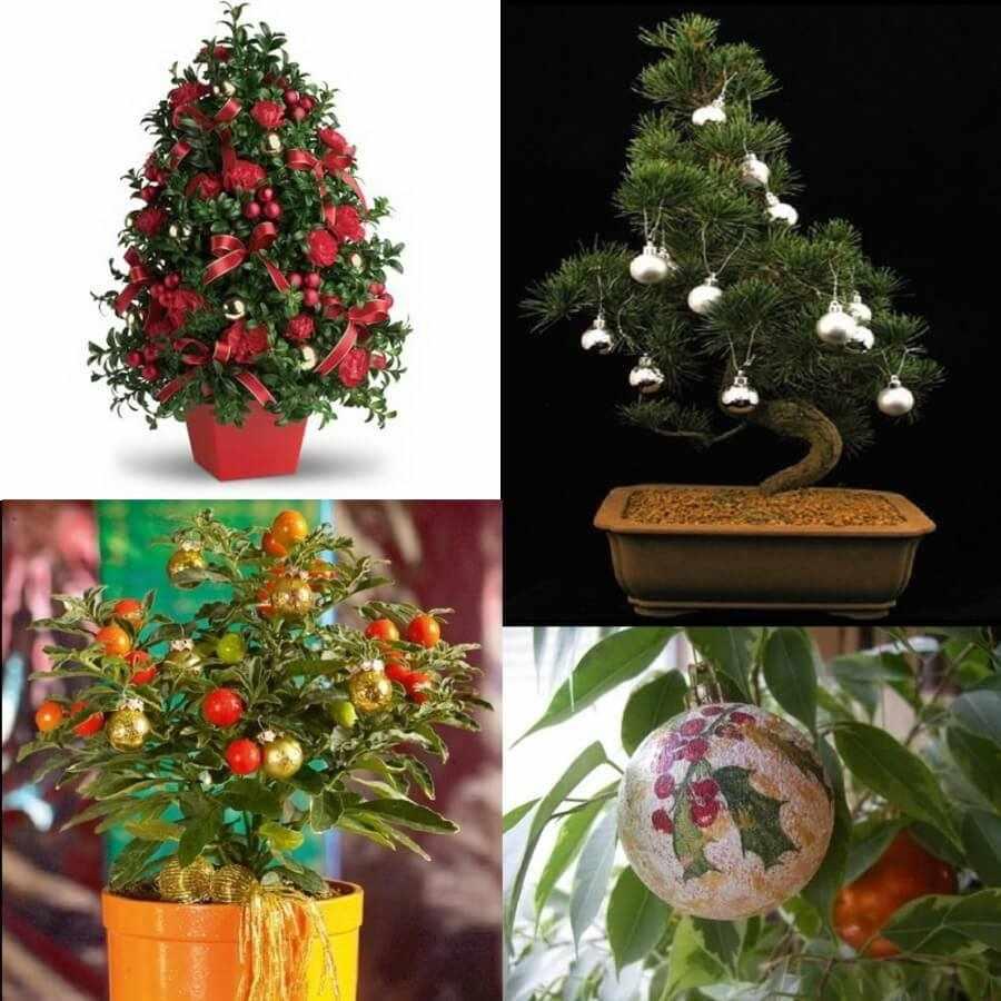 Новогоднее украшение растений