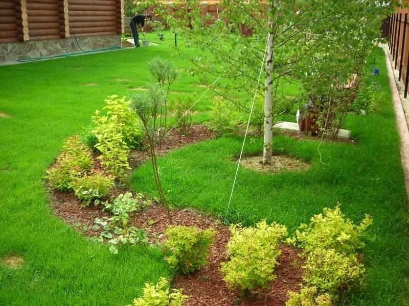 Кустарники и газон на участке