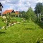 Яблони перед домом