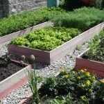 Огород с высокими грядкам