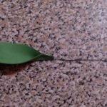 Клеим листики к проволоке