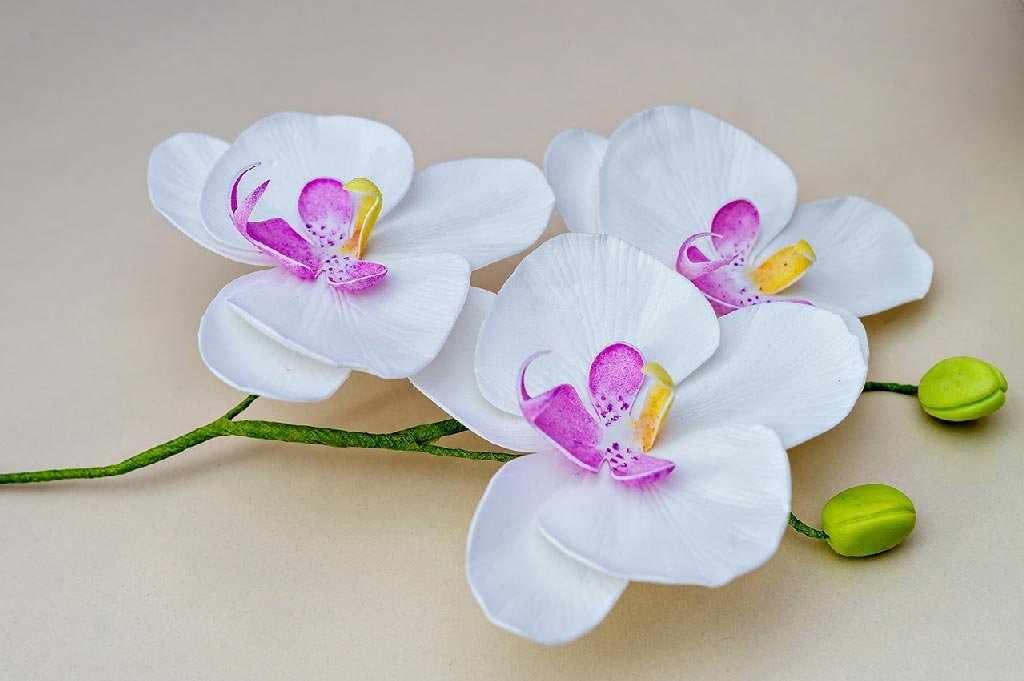 Веточка с цветочками
