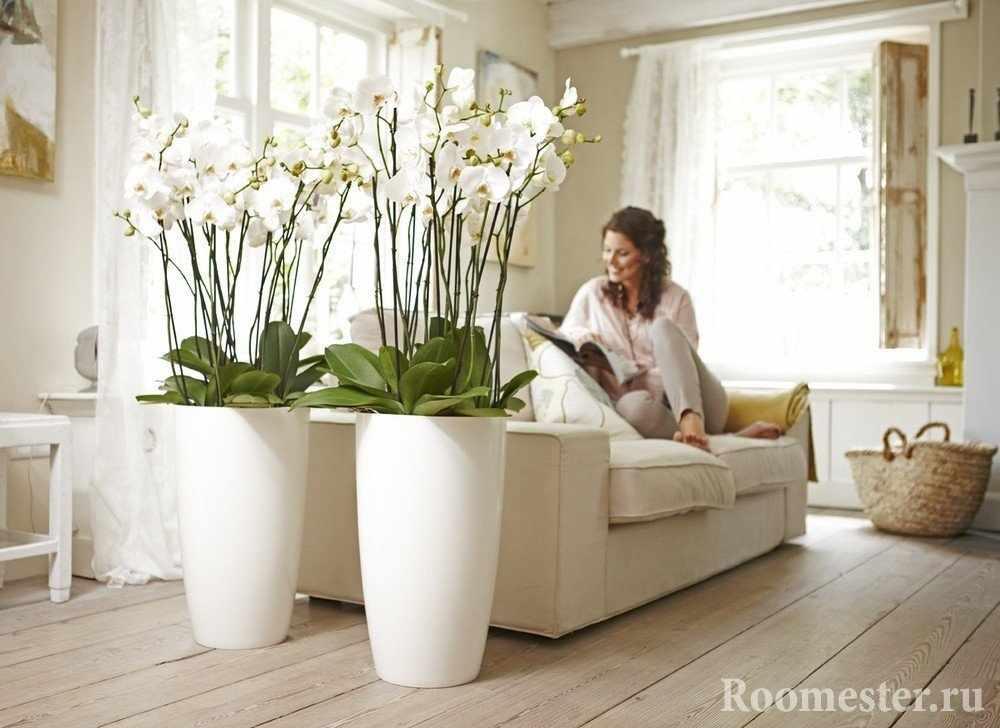 Цветы в горшках у дивана