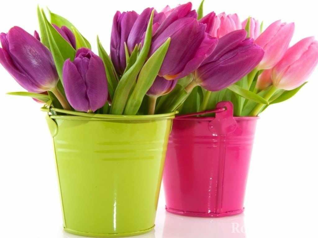 Тюльпаны в цветных ведерках