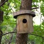 Скворечник на дереве