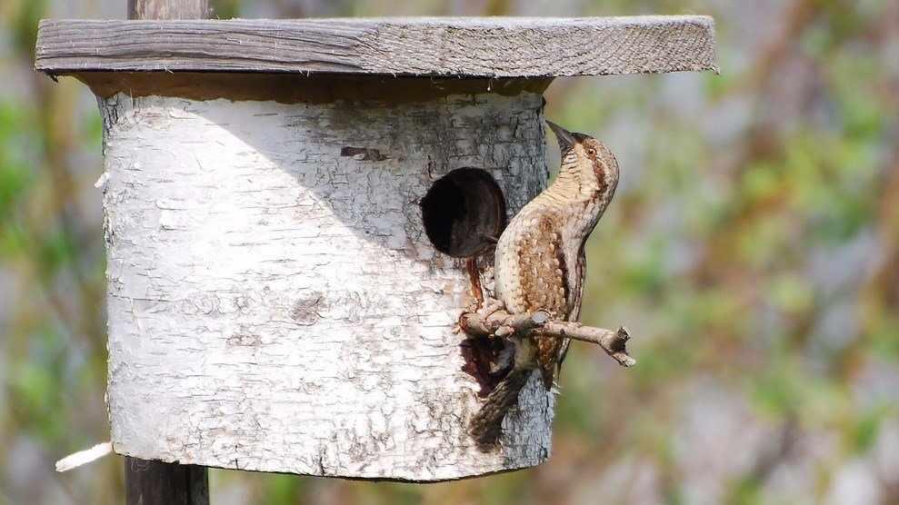 Птица на скворечнике из бревна