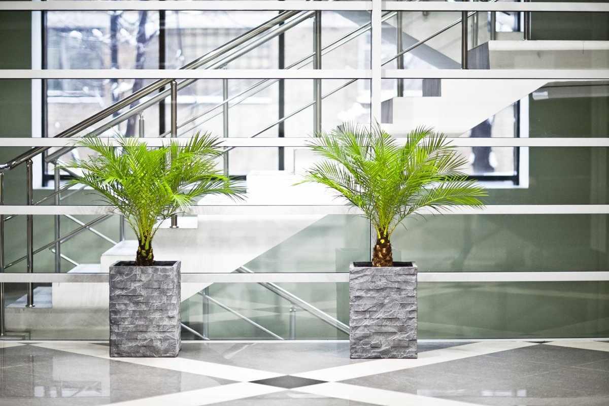 Две декоративные пальмы