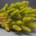 Зеленый лагурус для кроны