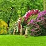 Забор из декоративных кустарников