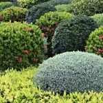 Виды декоративных кустарников
