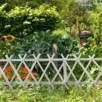 Подсолнух в огороде