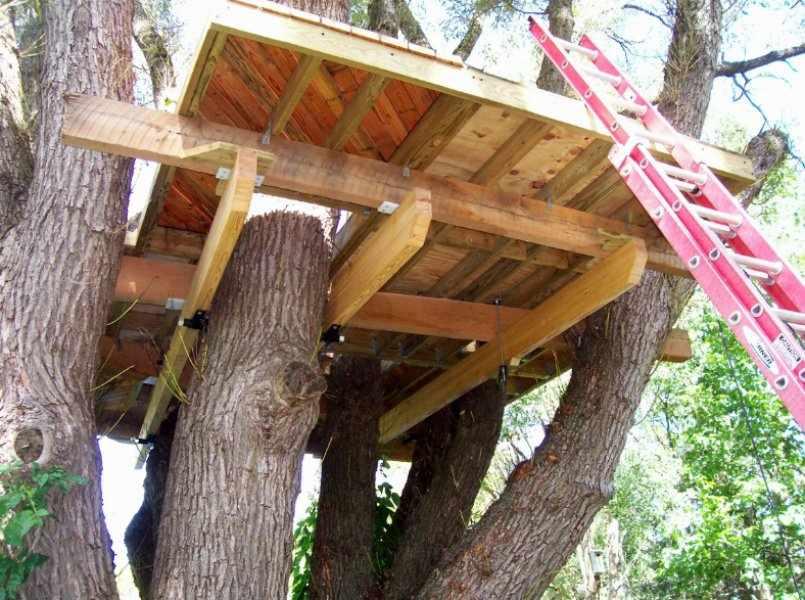 Строим жилище на дереве