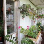 Цветы на открытом балконе