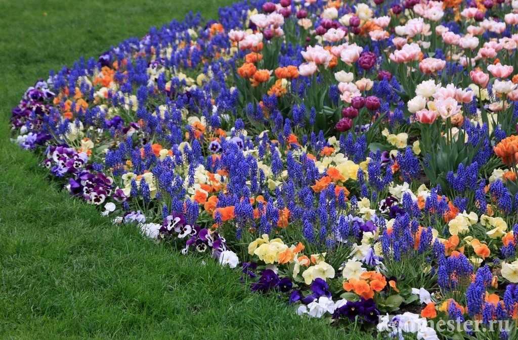 Сочетание цветов в клумбе