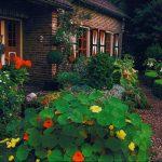 Цветы напротив дома