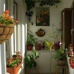 Цветы а стене