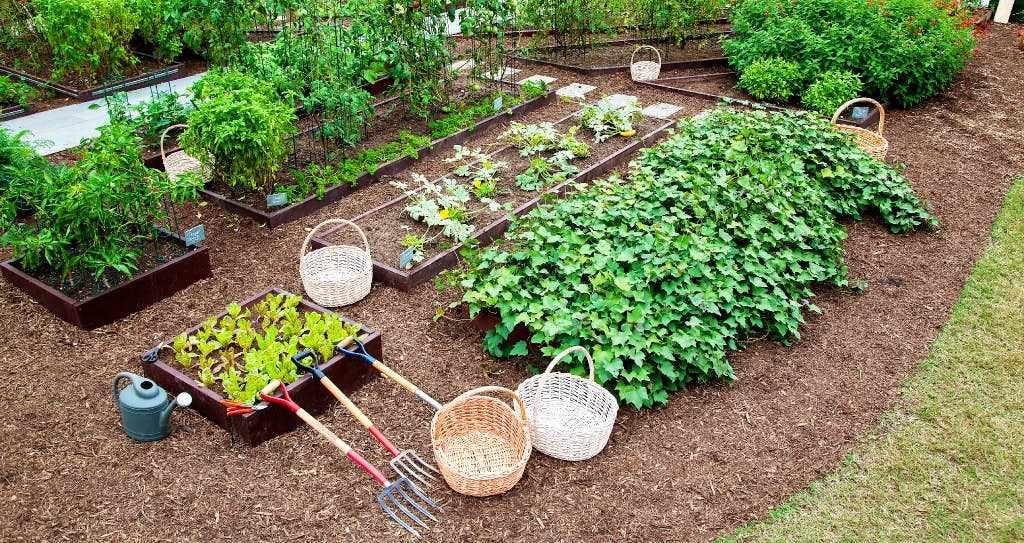 Небольшой огород на участке