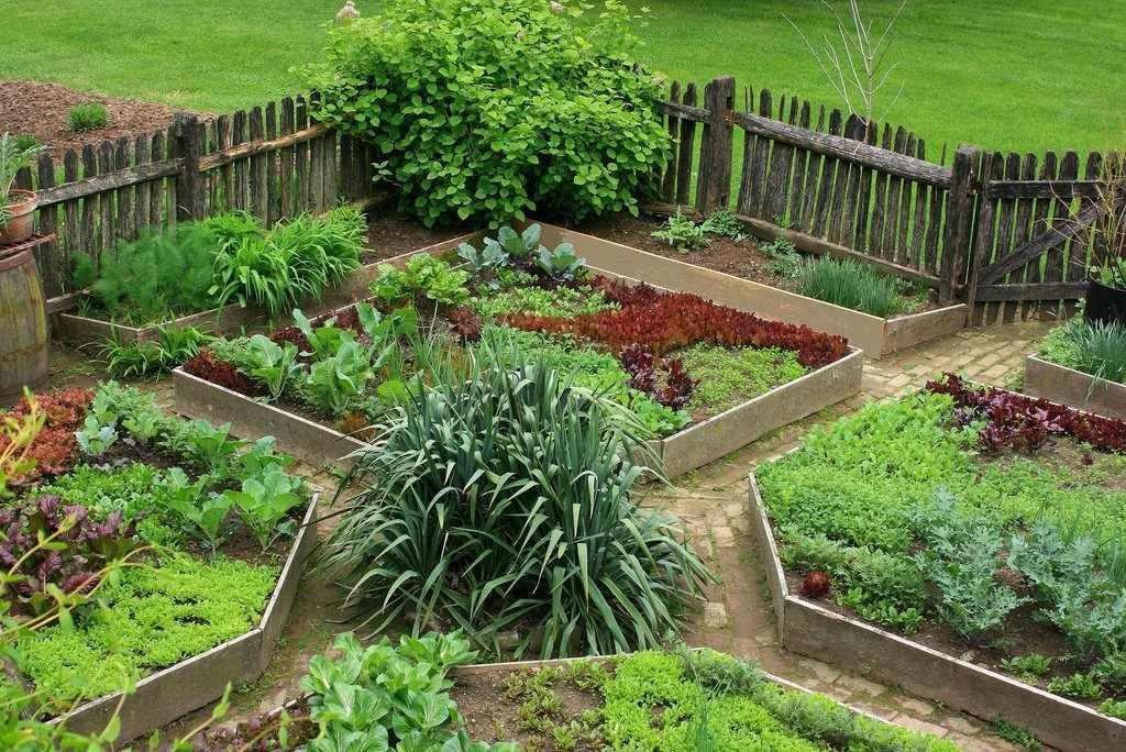 Расположений овощей на огороде