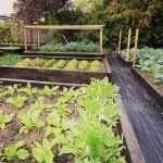 Грядки для посадки сезонных овощей