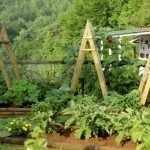 Небольшой огород на даче