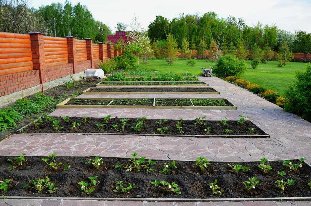Ухоженный огород на даче