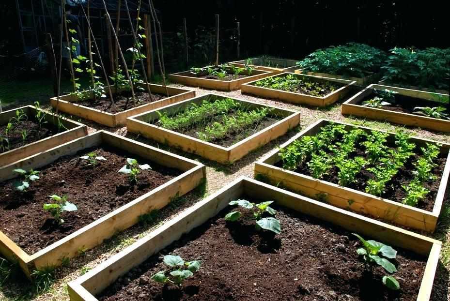 Ухоженный огород на участке