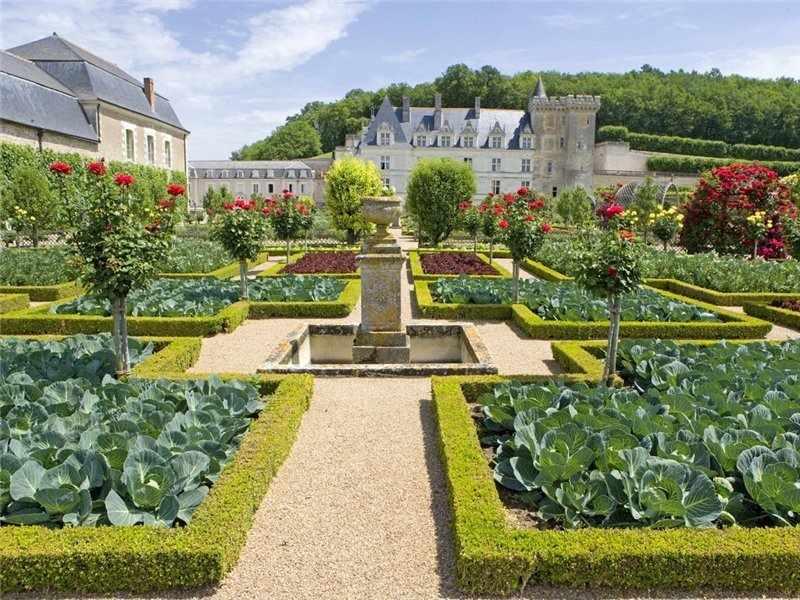 Огород возле роскошного дома