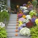 Цветы на ступеньках