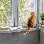 Кот на подоконнике на кухне