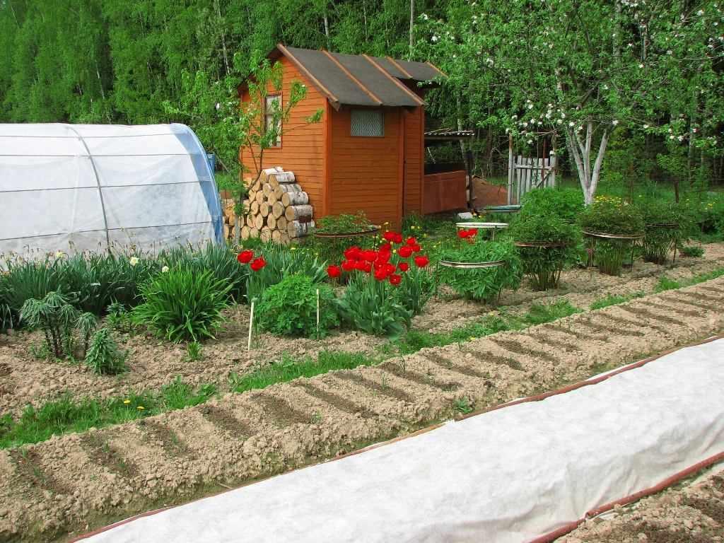 Садово-огородная зона на приусадебном участке