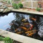 Небольшой пруд с рыбами