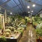 Множество кактусов