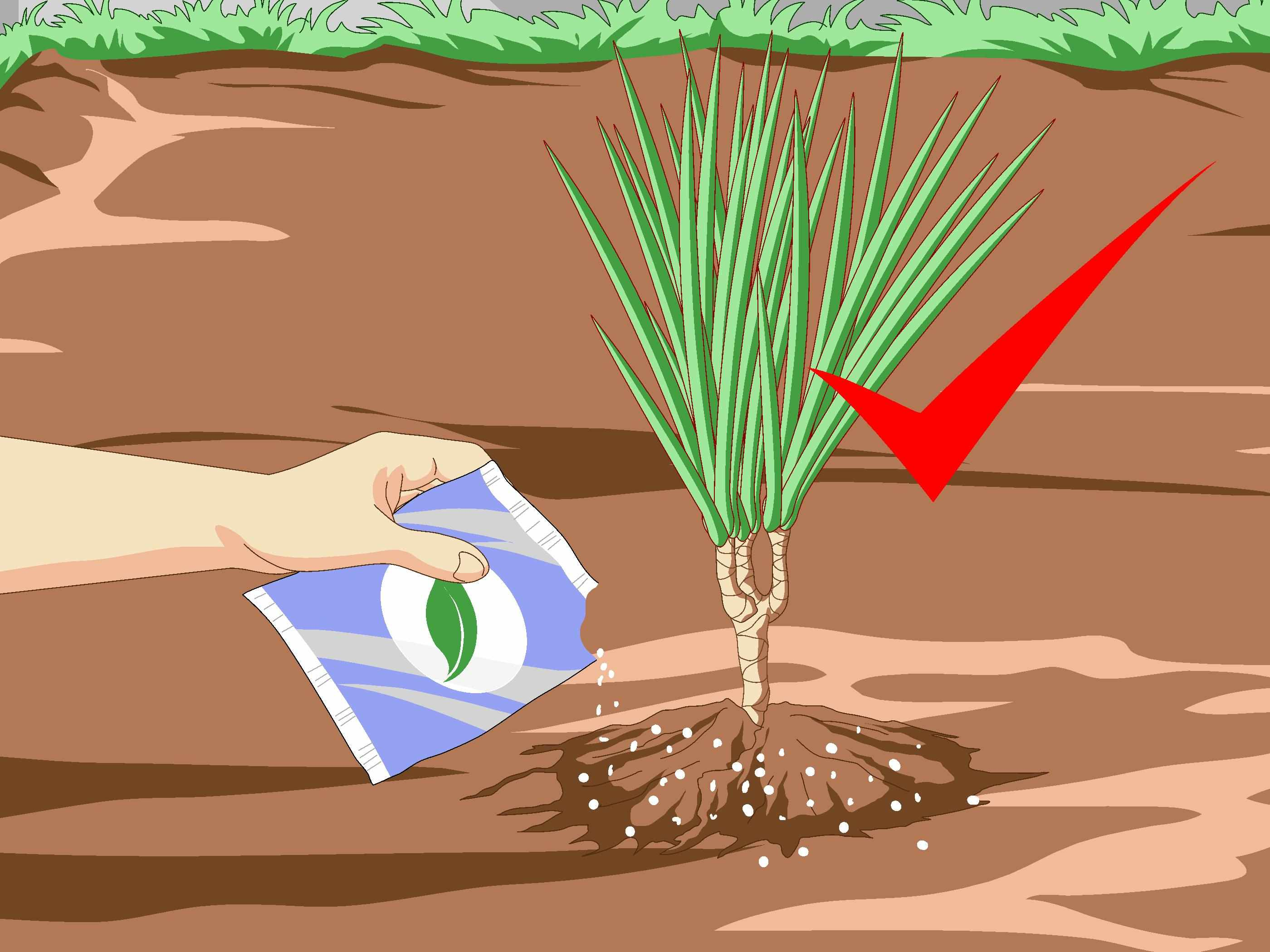 Подкормка растения