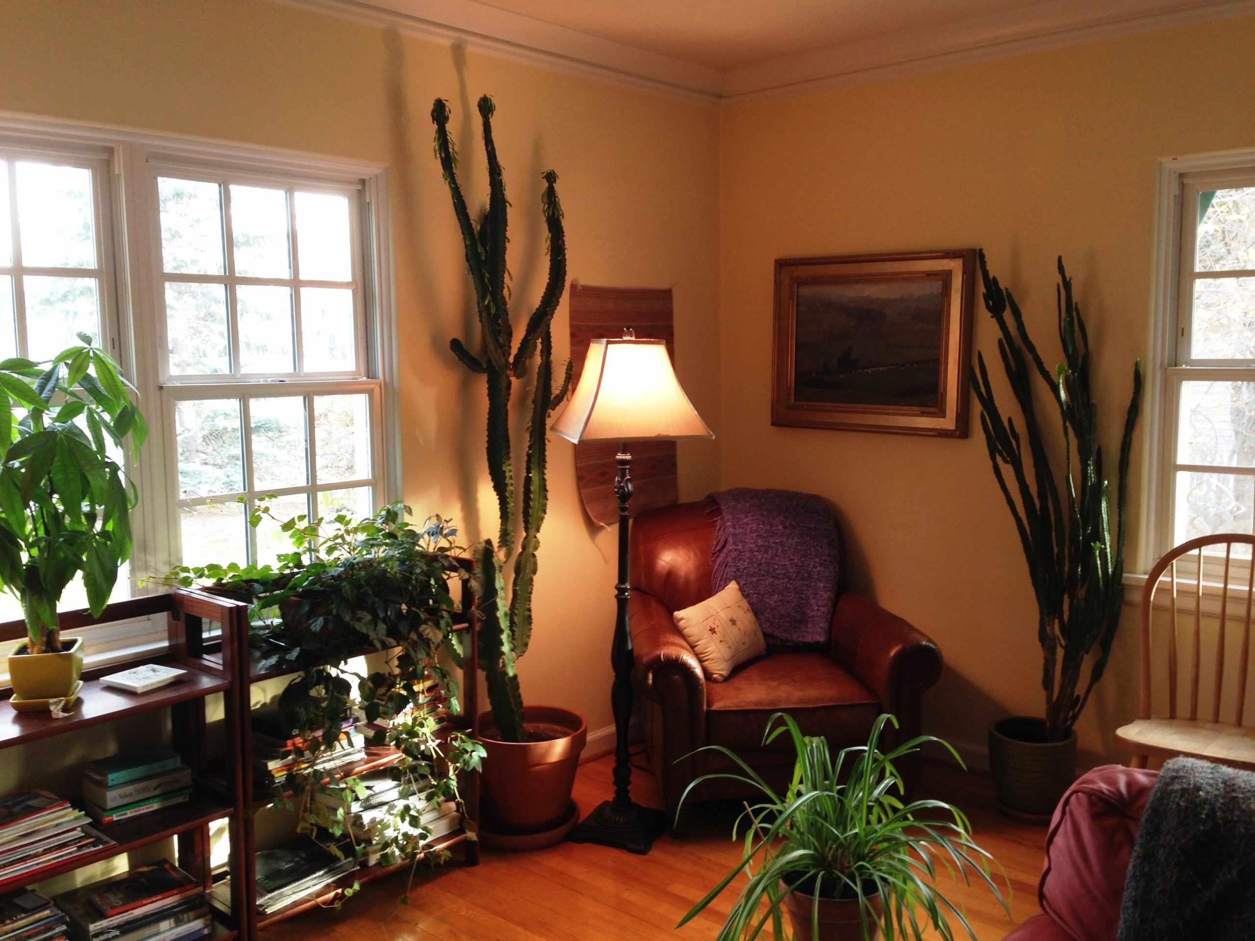 Зона мудрости и знаний по фен шуй в квартире