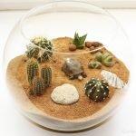 Кактусы в песке