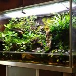 Мини сад в аквариуме