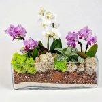 Разнообразные орхидеи