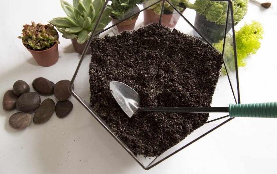 Почва для флорариума