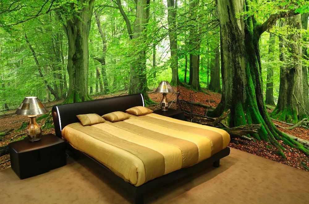 Лес с дубами