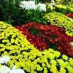 Масса цветов
