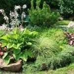 Сочетание разнообразных растений