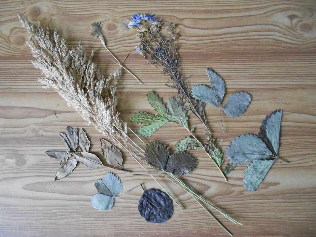 Сушка растений