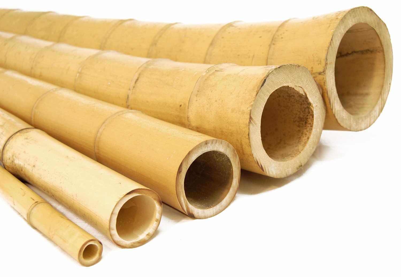Бамбук для декора