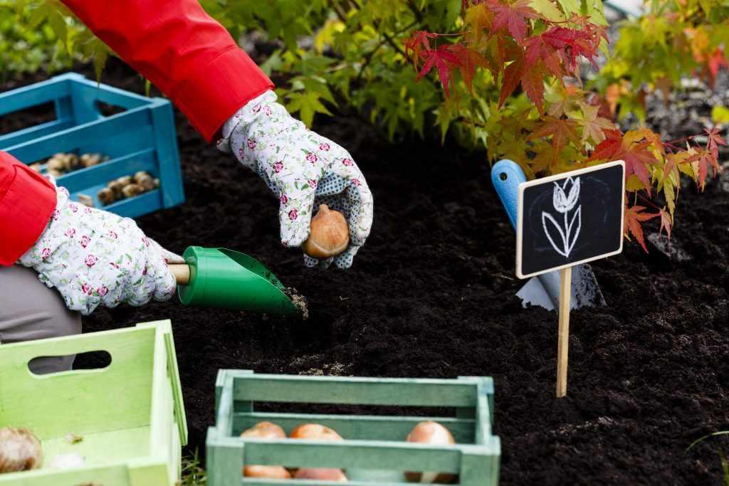 Посадка луковичных растений