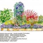 Схема посадки цветов на клумбе
