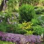 Цветы многолетники для клумбы