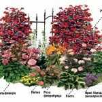Схема цветника из роз