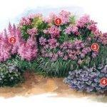 Цветник из розовых цветов