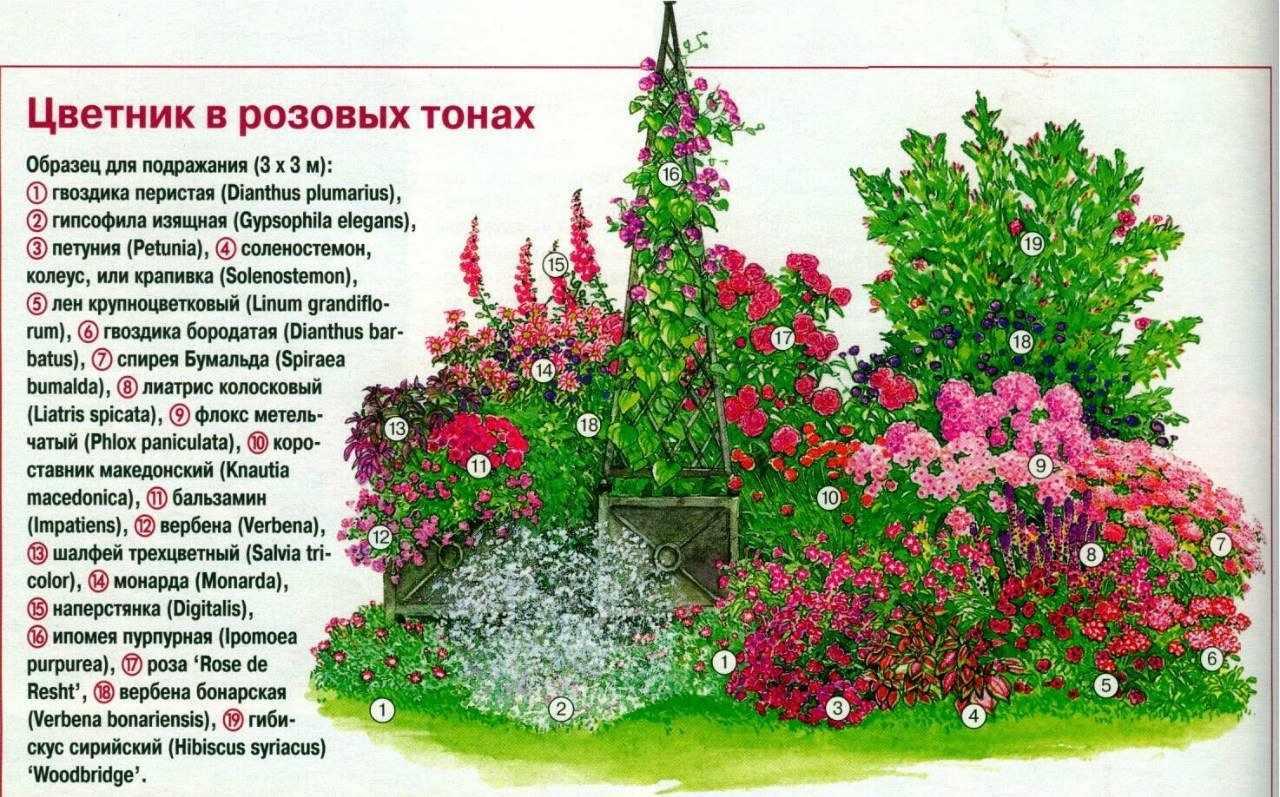 Клумба в розовох оттенках
