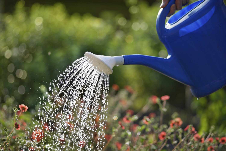 Поливать цветы